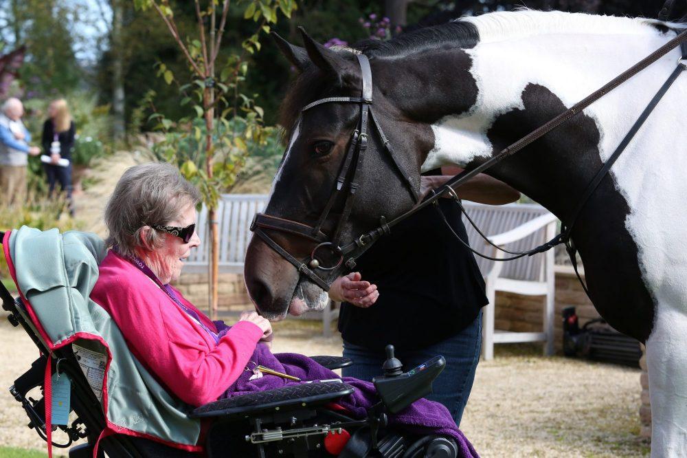 Pat meets Puzzle, a precious moment at Rowcroft Hospice