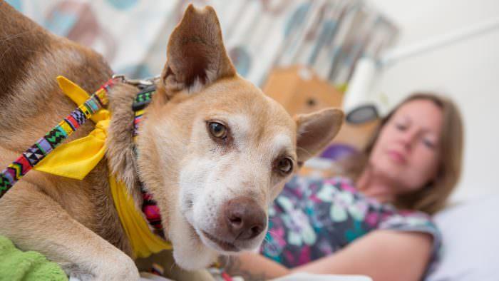 Rowcroft Hospice Visiting PAT dog